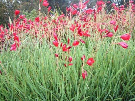 Botanical Gardens, Edinburgh, Scotland, UK, backpacksandblackboards.com