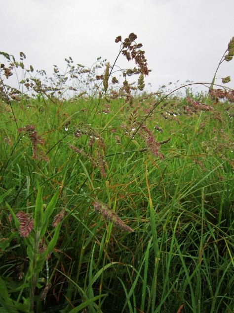 Wild Grass Growing Strong in Ballycastle, Northern Ireland, backpacksandblackboards.com