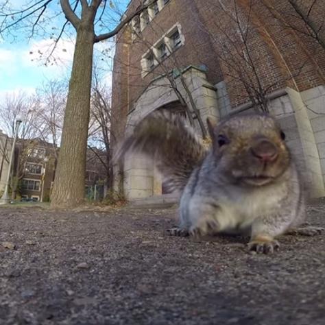 squirrel-takes-gopro-6