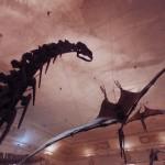 dinosaurs museums taipei