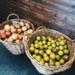 fruit juice taipei expat