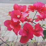 flowers taipei winter