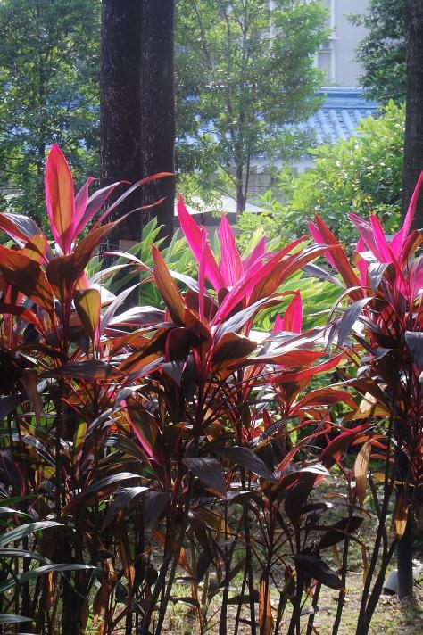 plants park chiang kai shek