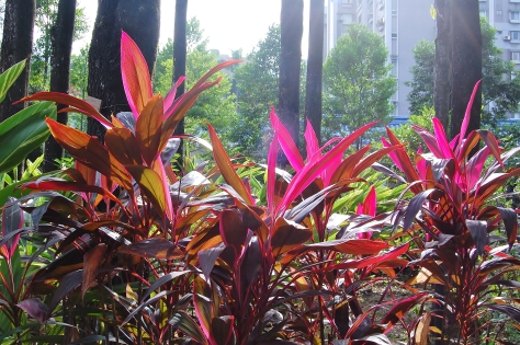 park nature chiang kai shek
