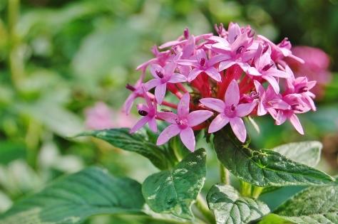 flowers taipei chiang kai shek