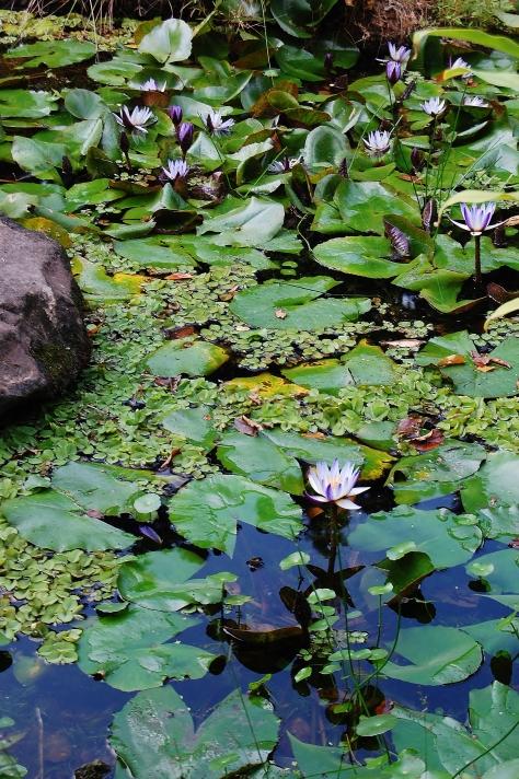 pond chiang kai shek