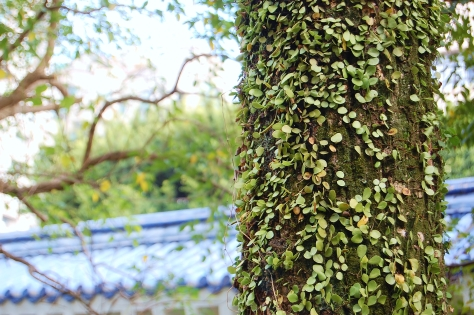 tree nature chiang kai shek